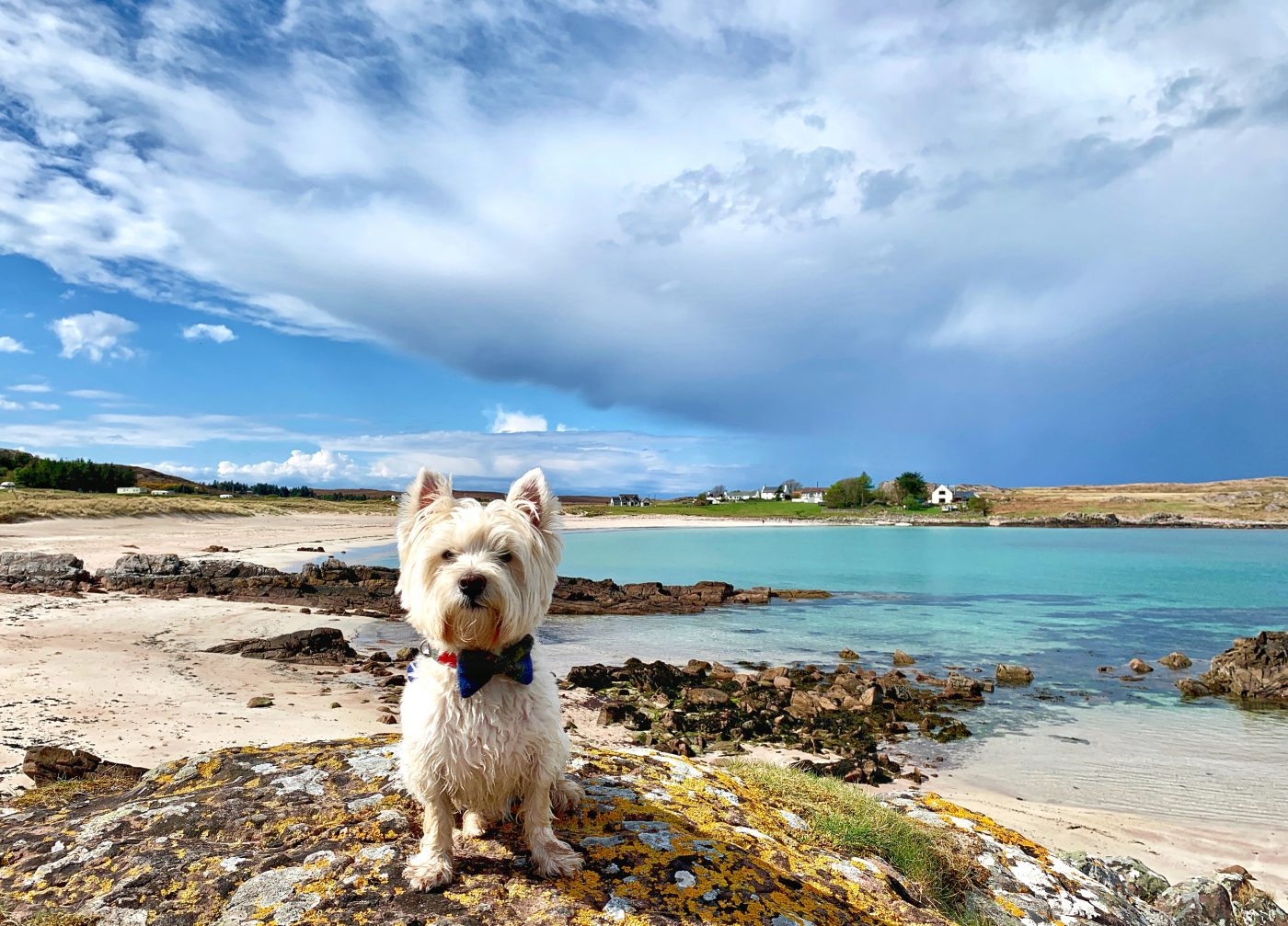 Scotland with the Wee White Dug – A Scottish Travel Blog